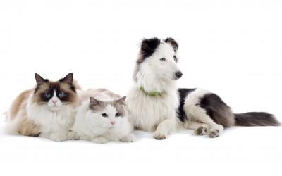 Bienvenue sur le site de la clinique vétérinaire du Col
