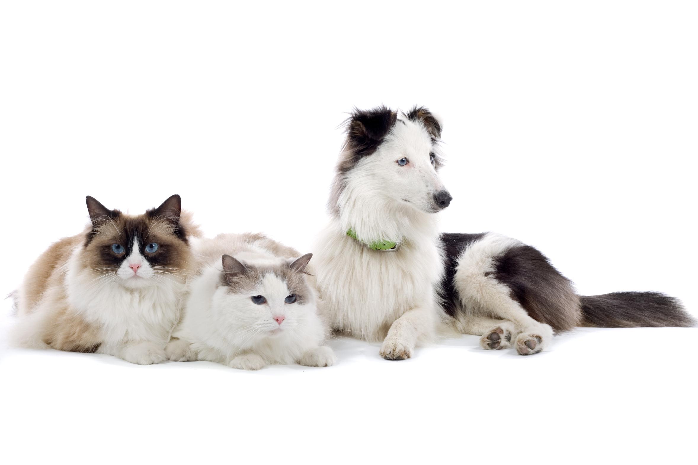 consultations générales clinique vétérinaire du col